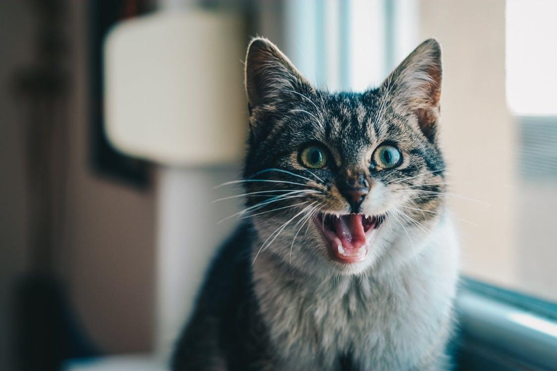 0d893876cfee Οι γάτες κατά βάθος θέλουν να σκοτώσουν τους ανθρώπους – Λήσταρχος ...